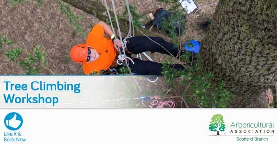 Scotland Branch – Tree Climbing Workshop