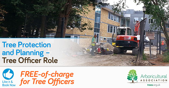 Tree Protection and Planning – Tree Officer Role
