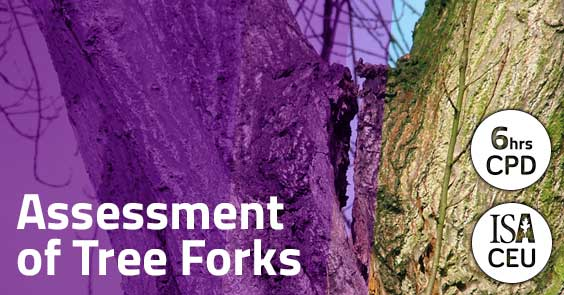 Assessment of Tree Forks