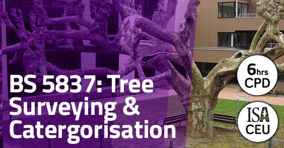 BS 5837: Tree Surveying and Categorisation
