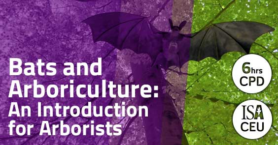 Bats and Arboriculture: An Introduction for Arborists