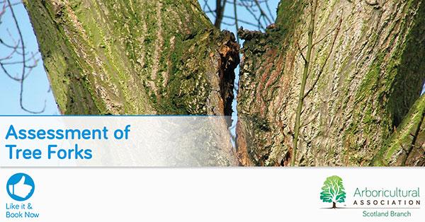 Assessment of Tree Forks – Scotland Branch
