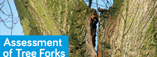 Assessment of Tree Forks comes to Ireland