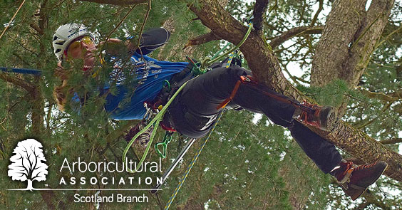 Scotland Branch – Tree Climbing Workshop
