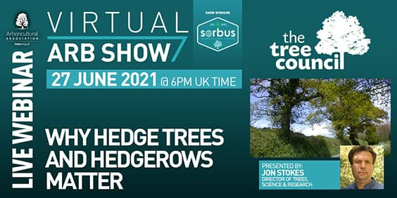 Why hedge trees and hedgerows matter