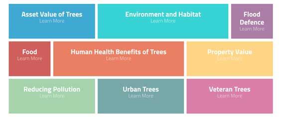 Trees are Amazing – Benefits of Trees