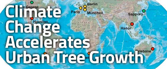 Climate change accelerates growth of urban trees