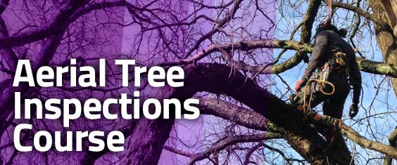 Aerial Tree Inspections: A Guide to Good Practice