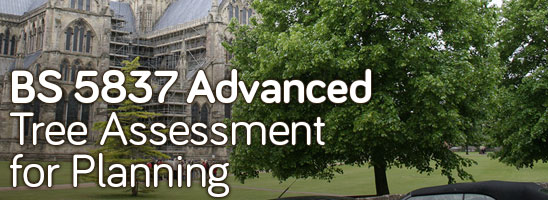 BS 5837 Advanced: Tree Assessment for Planning