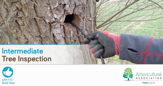 Intermediate Tree Inspection