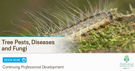 Tree Pests, Diseases and Fungi