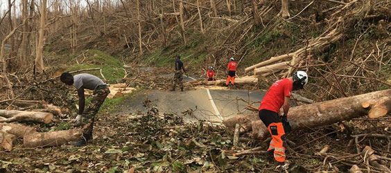 DART Tree Surgeons in Irma Relief Effort