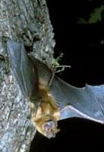 Bats British Standard public consultation