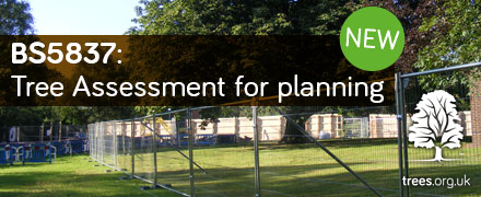 BS5837: Tree assessment for planning