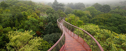 Amazing tree-top canaopy walkway in Cape Town