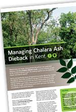 Chalara guide