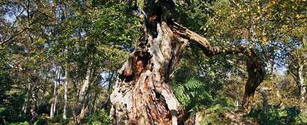 The Guardian 'Trees and their importance of their role in human history'