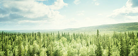 How trees could save humanity