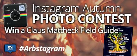 Instagram Autumn Photo contest