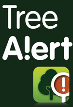 Ash dieback: Tree alert released by the Forestry Commission