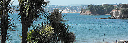 The i-Tree project piloted in Torbay