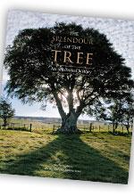 The Splendour of the Tree