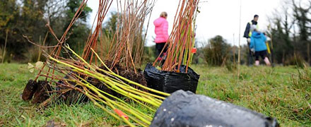 Initiative to plant 1 million trees across Ireland