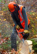 Arboriculture, Forestry, Horticulture & Landscape Trailblazer Apprenticeship