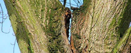 New series of UK events for the Assessment of Tree orks in collaboration with Myerscough College