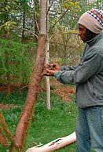 Tree Council annual Tree Care Campaign