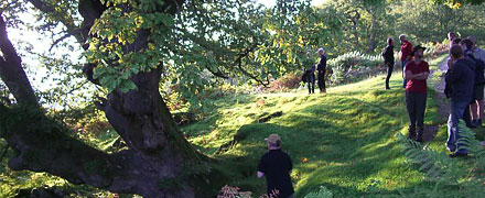 Valuing and Managing Veteran Trees Advanced 3 day course